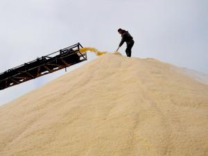 Живая соль Крыма